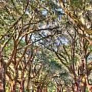 Plantation Allee Of Oaks Art Print