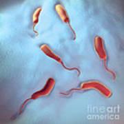 Cholera Bacteria Art Print