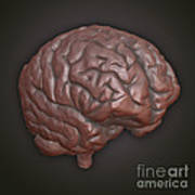 Clay Model Of Brain Art Print
