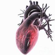 Heart Anatomy Art Print