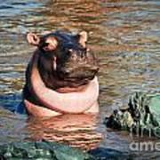 Hippopotamus In River. Serengeti. Tanzania Art Print