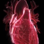 Human Heart Art Print
