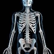 Human Skeleton, Artwork Art Print