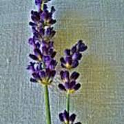 Lavender On Linen Art Print