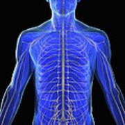 The Nervous System Art Print