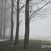 Trees With Fog Art Print