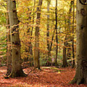 Vibrant Autumn Fall Forest Landscape Image Art Print