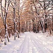 Winter White Forest Art Print