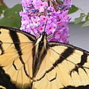 #859 D480 Swallowtail 2010.jpg Art Print