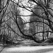 9 Black And White Artistic Painterly Icy Entrance Blocked By Braches Art Print