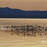 Mono Lake California Print by Jason O Watson