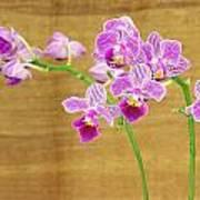 Purple Orchid-12 Art Print