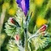 Spring Wild Flower Art Print