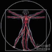 Vitruvian Man Art Print