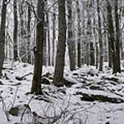 Forest In Winter Art Print