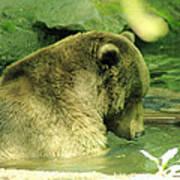A Bear Bath Art Print