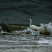 A Beautiful Snowy White Egret On Hilton Head Island Beach Art Print