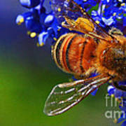 A Bee's Life Art Print