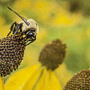 A Bee's Paradise Art Print by Jeff Swanson