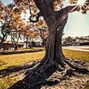 A Big  Tree Trunk Of Long Beach In The Autumn Art Print