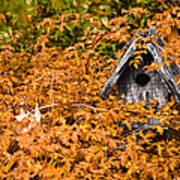 A Bird House Sits Empty In Fall Art Print