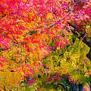 Autumn In Yountville, California Art Print