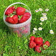 A Bucket Of Strawberries Art Print