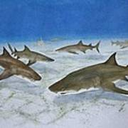 A Bushel Of Lemon Sharks Art Print