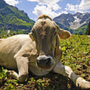 A Calf In The Mountains Art Print