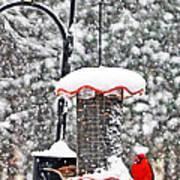 A Cardinal Winter Art Print