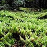 A Carpet Of Moss  Art Print by Steven Valkenberg