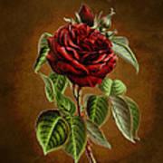 A Chocolate Beauty Art Print