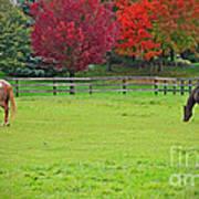A Couple Horses And Beautiful Autumn Trees Art Print