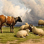 A Cow And Five Sheep Art Print