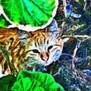 A Curious Cat Art Print