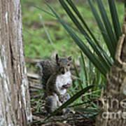 A Curious Squirrel Art Print