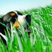 A Cute Dog In The Grass Art Print