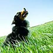 A Cute Dog On The Field Art Print