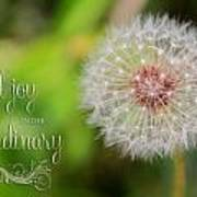 A Dandy Dandelion With Message Art Print