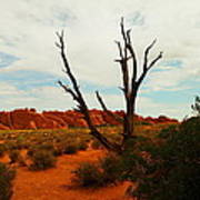 A Dead Tree Foreground A Maze Of Rocks Art Print