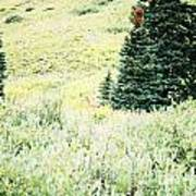 A Deer Hiding In The Tundra Art Print