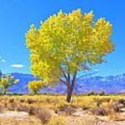 A Desert Autumn Art Print