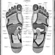A Diagram Of Parts Of The Foot Art Print by Pat Byrnes