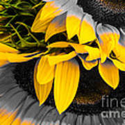A Different Kind Of Sunflower Art Print