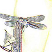 A Dragonfly In My Dreams Art Print
