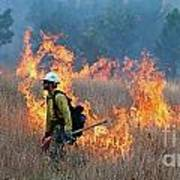 A Firefighter Ignites The Norbeck Prescribed Fire. Art Print