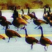 A Flock Of Geese Art Print
