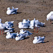 A Flock Of Seagulls Art Print