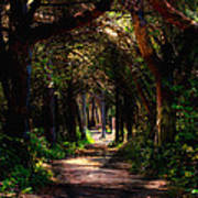 A Forest Path -dungeness Spit - Sequim Washington Art Print