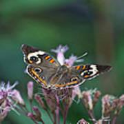 A Friendly Butterfly Smile Art Print
